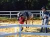 a_cavallo_1